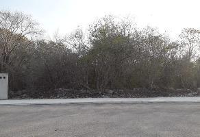 Foto de terreno habitacional en venta en  , la castellana, mérida, yucatán, 0 No. 01