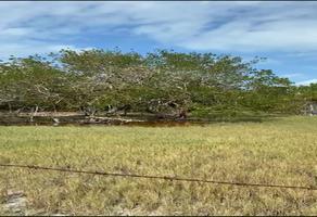 Foto de terreno habitacional en renta en  , la isla, bacalar, quintana roo, 0 No. 01