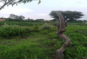 Foto de terreno habitacional en venta en  , la loma, zapopan, jalisco, 13902735 No. 01