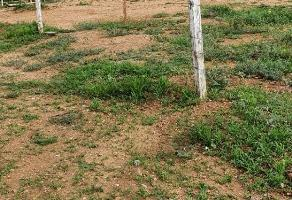 Foto de terreno habitacional en venta en  , la oaxaqueña, santa cruz xoxocotlán, oaxaca, 0 No. 01