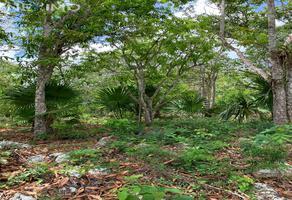 Foto de terreno habitacional en venta en la veleta , la veleta, tulum, quintana roo, 0 No. 01