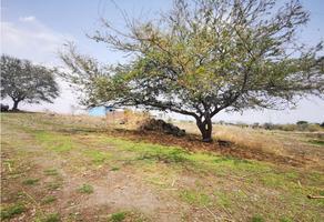 Foto de terreno habitacional en venta en  , lagunilla del salto, cuernavaca, morelos, 0 No. 01