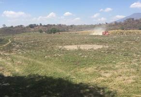 Foto de terreno industrial en venta en las palmitas 169, ingenio, tala, jalisco, 0 No. 01
