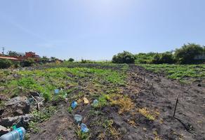 Foto de terreno habitacional en venta en laureles , real del puente, xochitepec, morelos, 0 No. 01