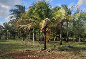 Foto de terreno habitacional en venta en leona vicario , leona vicario, benito juárez, quintana roo, 8308338 No. 01