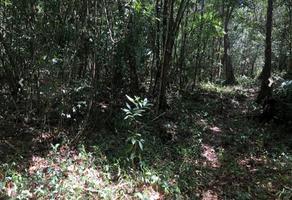 Foto de terreno comercial en venta en leona vicario , leona vicario, felipe carrillo puerto, quintana roo, 19060858 No. 01