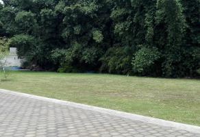 Foto de terreno habitacional en venta en los pinos 16, los pinos jiutepec, jiutepec, morelos, 0 No. 01
