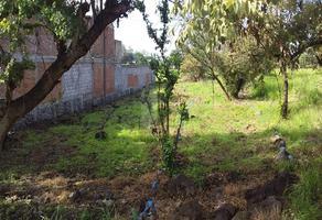 Foto de terreno habitacional en venta en los reyes , campo sotelo, temixco, morelos, 0 No. 01