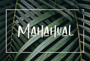 Foto de terreno habitacional en venta en mahahual , mahahual, othón p. blanco, quintana roo, 0 No. 01