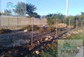 Foto de terreno habitacional en renta en  , mérida, mérida, yucatán, 7605679 No. 01
