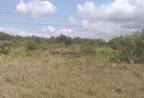 Foto de terreno habitacional en renta en  , miramar, altamira, tamaulipas, 11818351 No. 01