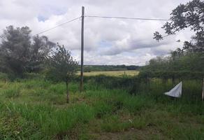 Foto de terreno industrial en renta en  , montemorelos centro, montemorelos, nuevo león, 0 No. 01
