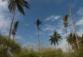 Foto de terreno comercial en venta en novillero , playa novillero, tecuala, nayarit, 16802290 No. 01