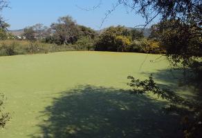 Foto de terreno habitacional en venta en ojo de agua , tonalá centro, tonalá, jalisco, 14375287 No. 01