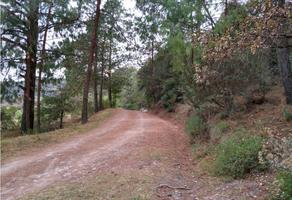 Foto de terreno habitacional en venta en  , omitlán de juárez centro, omitlán de juárez, hidalgo, 0 No. 01