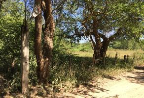 Foto de terreno habitacional en venta en orquideas 38 , coapinole, puerto vallarta, jalisco, 12815797 No. 01