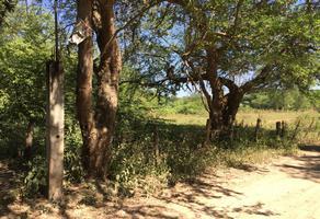 Foto de terreno habitacional en venta en orquideas 38 , coapinole, puerto vallarta, jalisco, 0 No. 01
