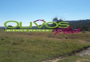 Foto de terreno habitacional en venta en  , otinapa, durango, durango, 11765831 No. 01