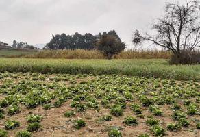 Foto de terreno habitacional en venta en ozumba de alzate , ozumba de alzate, ozumba, méxico, 0 No. 01