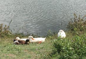 Foto de terreno habitacional en venta en papagayo 2, lago de guadalupe, cuautitlán izcalli, méxico, 0 No. 01