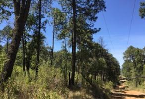 Foto de terreno habitacional en venta en paseo de los pinos lote 30, la loma alta, tapalpa, jalisco, 0 No. 01