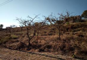 Foto de terreno habitacional en venta en  , pedregal de san miguel, tlajomulco de zúñiga, jalisco, 6461879 No. 02