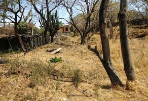 Foto de terreno habitacional en venta en pedregal , las fuentes, jiutepec, morelos, 16801971 No. 01