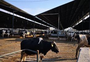 Foto de rancho en venta en  , pedro escobedo centro, pedro escobedo, querétaro, 9448722 No. 01