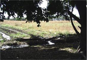 Foto de terreno habitacional en venta en  , plan de ayala, cuautla, morelos, 0 No. 01