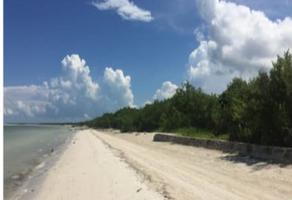 Foto de terreno habitacional en venta en playa , isla de holbox, lázaro cárdenas, quintana roo, 15913328 No. 01