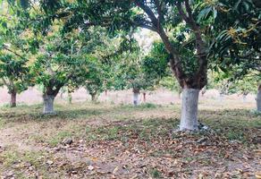 Foto de terreno comercial en venta en playa los cocos, mpio. de san blas, nayarit, méxic , matanchen, san blas, nayarit, 0 No. 01