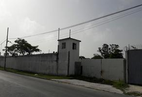 Foto de terreno habitacional en renta en  , playa norte, carmen, campeche, 0 No. 01