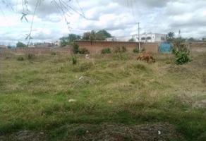 Foto de terreno habitacional en venta en predio el guamuchil 00 , guadalupe, tala, jalisco, 5445772 No. 05
