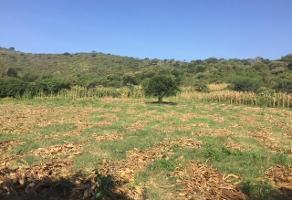 Foto de terreno industrial en venta en predio la peña amarilla 20, valle de tlajomulco, tlajomulco de zúñiga, jalisco, 11339715 No. 01