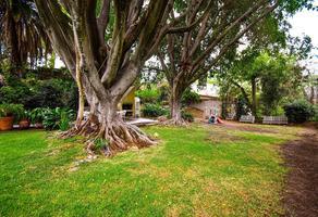 Foto de terreno habitacional en venta en privada de la nogalera 4, bosques de san isidro, zapopan, jalisco, 0 No. 01
