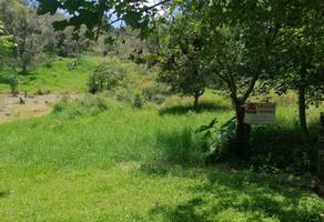 Foto de terreno habitacional en venta en prolongación francisco javier mina , los carriles, coatepec, veracruz de ignacio de la llave, 0 No. 01