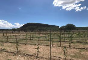Foto de terreno habitacional en venta en  , quintas de la viña, tequisquiapan, querétaro, 16071493 No. 01