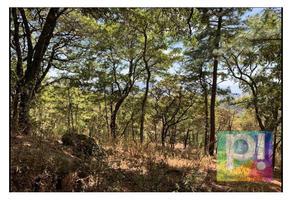 Foto de terreno habitacional en venta en  , quiroga, quiroga, michoacán de ocampo, 18951161 No. 01