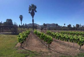 Foto de terreno habitacional en venta en rancho tecate , hacienda tecate, tecate, baja california, 13552624 No. 01