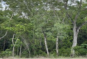 Foto de terreno habitacional en venta en region 15 , la veleta, tulum, quintana roo, 0 No. 01