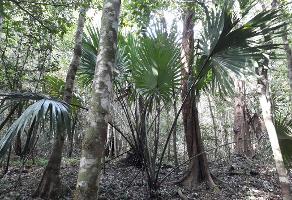 Foto de terreno comercial en venta en ruta de los cenotes , puerto morelos, benito juárez, quintana roo, 6284367 No. 01