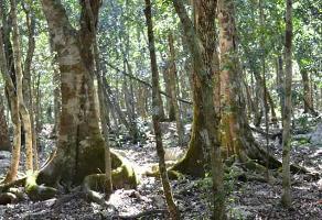 Foto de terreno comercial en venta en ruta de los cenotes , puerto morelos, benito juárez, quintana roo, 6284371 No. 01