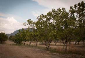 Foto de rancho en venta en  , san antonio, ramos arizpe, coahuila de zaragoza, 13809843 No. 01