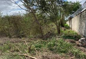 Foto de terreno habitacional en venta en  , san francisco de asís, conkal, yucatán, 15144238 No. 01