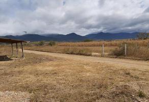 Foto de terreno habitacional en venta en  , san lázaro etla, reyes etla, oaxaca, 17752889 No. 01