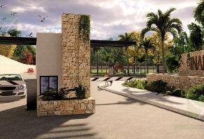 Foto de terreno habitacional en venta en  , san pedro cholul, mérida, yucatán, 13682883 No. 01