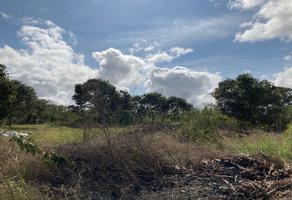 Foto de terreno habitacional en venta en  , san pedro cholul, mérida, yucatán, 18797480 No. 01
