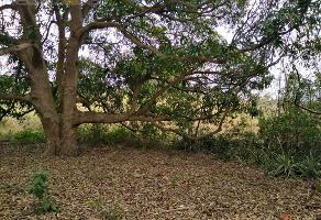 Foto de terreno habitacional en venta en  , santa elena, pueblo viejo, veracruz de ignacio de la llave, 11927360 No. 01