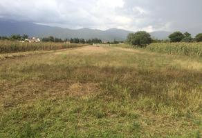 Foto de terreno habitacional en venta en  , santa maria tlalixtac, santa maría tlalixtac, oaxaca, 10723650 No. 01