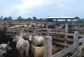 Foto de terreno industrial en venta en s/c , dzonot carretero, tizimín, yucatán, 9076983 No. 01